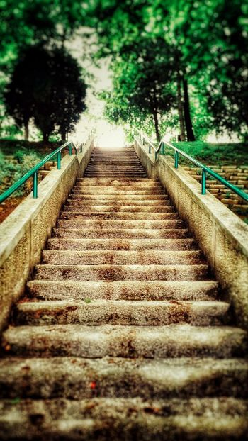 Light Light And Shadow Trees Green Park Eyem Nature Lovers  Stairs Life In Colors Timless Empty