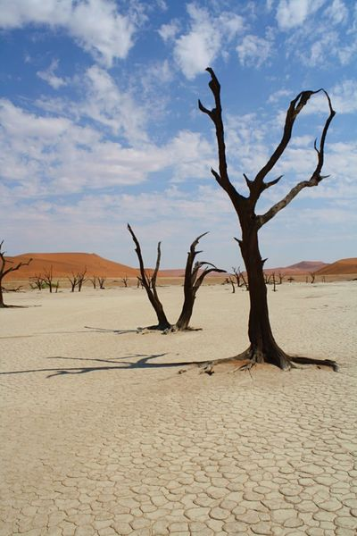 """In Sossusvlei, Namibia. This area is considered one of Namibia's most beautiful locations. Its dunes are some of the highest in the world reaching almost 400 meters. Its name translates to """"dead-end marsh"""", hence all the barren trees and lack of vegetation. Its breathtaking to be there amongst it all. aAfrican LandscapeaAridaArid LandscapebBarrendDryDDuneslLandscapelLandscape_photographyNNamibiaNNatural BeautyNNatureNNature PhotographysSand DunesSSky And CloudssSky And TreesSSossusvleiSSossusvlei Desert - NamibiaTTrees The Great Outdoors - 2017 EyeEm Awards Perspectives On Nature"""