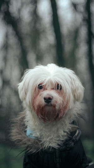 Portrait of cute dog outdoors