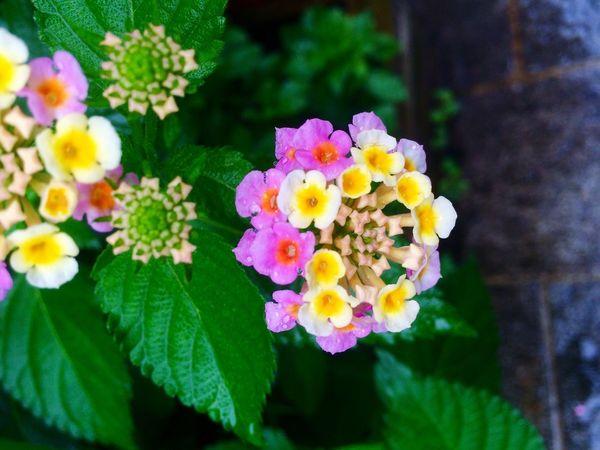 可愛い〜♪カラフル♪♪でも名前は知らない! KAWAII Colorful The Name Of This Flower? Hello World Nature Flower Japan Japanese  Iphonegallery EyeEm Gallery Enjoying Life Peace Hope