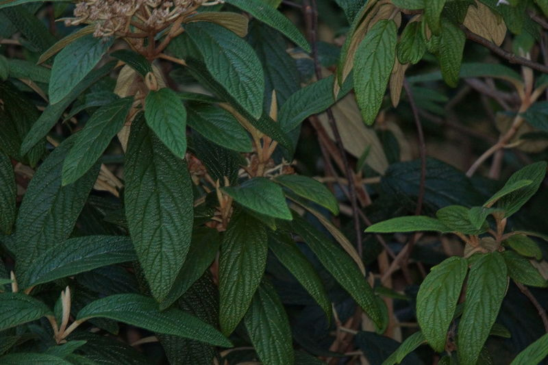 Alternative Medicine Beauty In Nature Close-up Day Focus On Foreground Fragility Freshness Green Color Growth Herb Leaf Nature No People Outdoors Plant