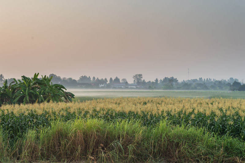 Plant Landscape Beauty In Nature Tranquil Scene Land Field Tranquility Environment Scenics - Nature Growth Sky Grass Tree Rural Scene Agriculture Nature No People Crop  Farm Day Outdoors