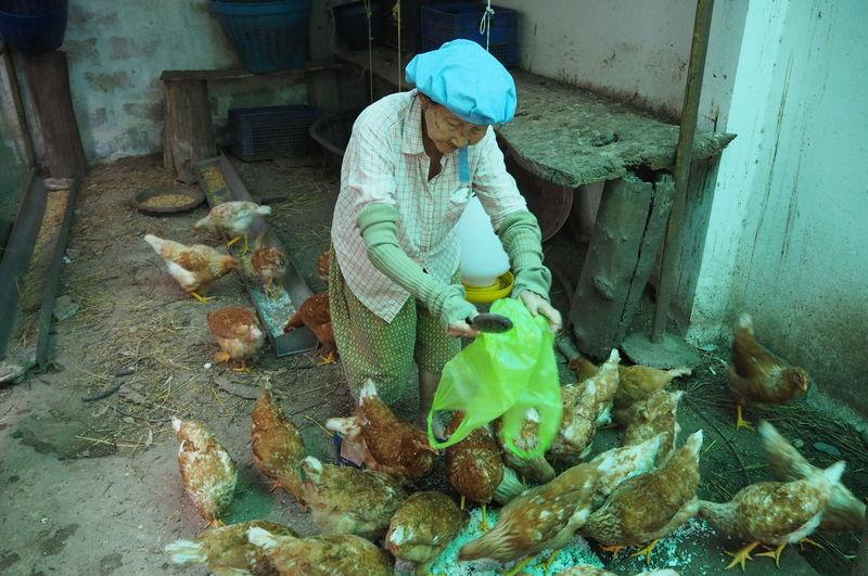 Senior Woman Working At Farm