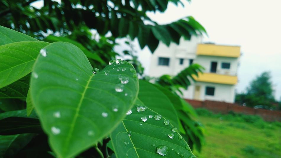Drop Water Leaf Nature Green Color Beauty In Nature Photography Featured Photographer Featured Photo EyeEmNewHere The Week On EyeEm This Is Queer