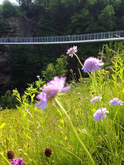 The Bridge over troubled Water Nature Flowers