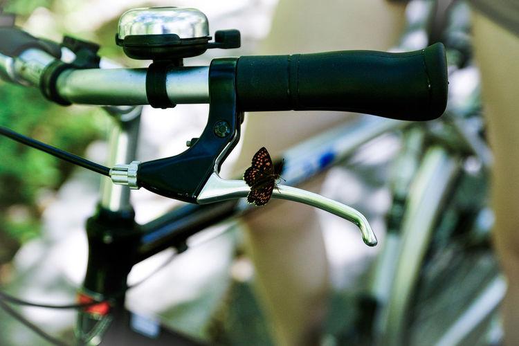 Art Bike Bike Ride Butterfly Fahrrad Nature Nature_collection Schmetterling