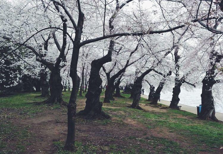 Bare trees on grassy field