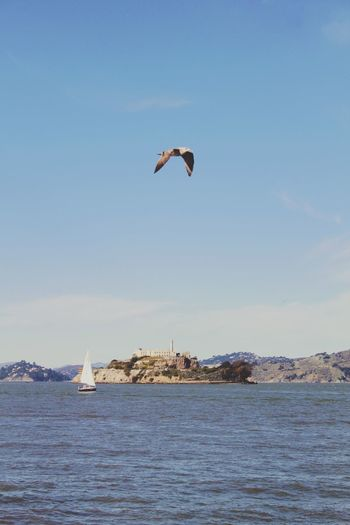 View of bird flying over calm blue sea