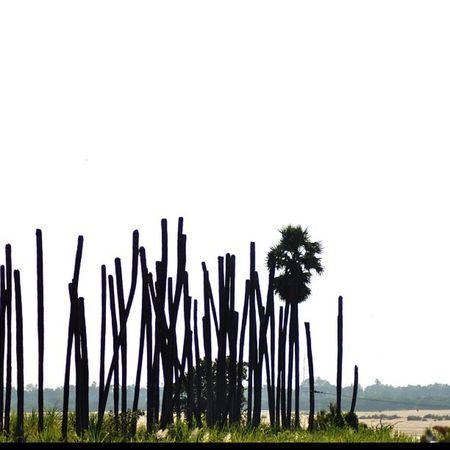 Ihithro Nature Abstract Kuchipudi