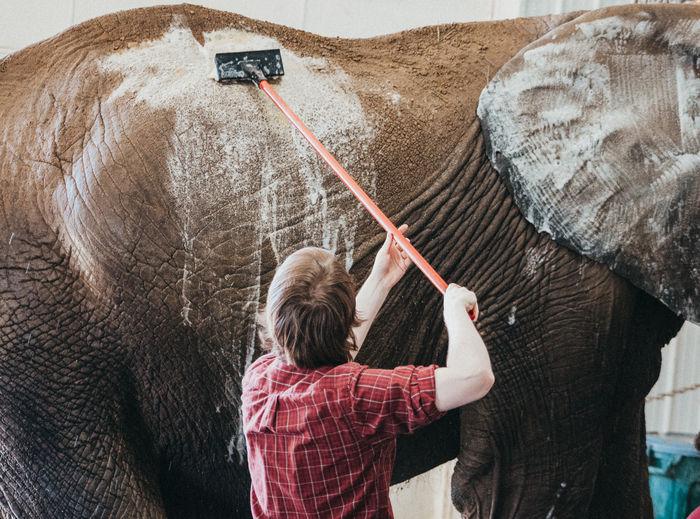 Elephant Elephants Elephants Bathing ZooKeeper Bath Cleaning Animal Themes Animal Animals Red Shirt Scrubbing Brush Soap Soapy Südtirol Man Men Animals In Captivity Bathtime