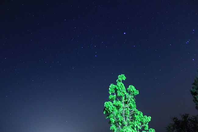 Stars Constellation Tree Cosmos Landscape Miles Away Lieblingsteil Sky Night Nature Star - Space Low Angle View Space And Astronomy Beauty In Nature Green Color Outdoors Space No People Astronomy Scenics Galaxy Milky Way