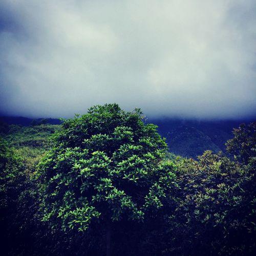 登山顶,风雨欲来。
