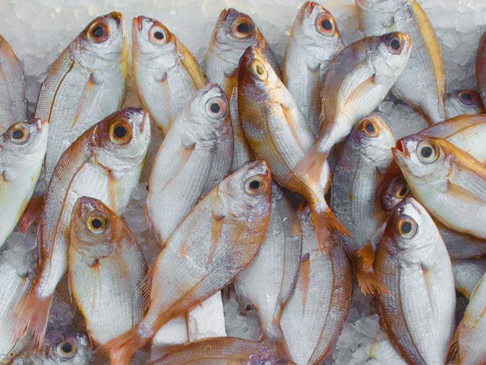 Full Frame Shot Of Fishes For Sale