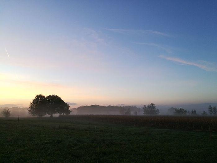 Fog Field