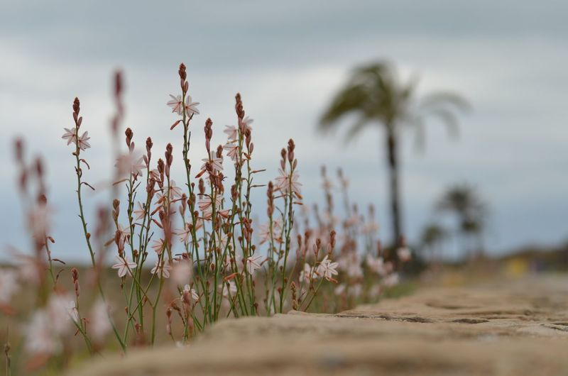 EyeEm Nature Lover EyeEm EyeEm Gallery Plant Growth Sky Nature Land Beauty In Nature No People Tranquility Field Day Selective Focus Focus On Foreground Tranquil Scene Beach Outdoors Flowering Plant Flower Scenics - Nature Cloud - Sky