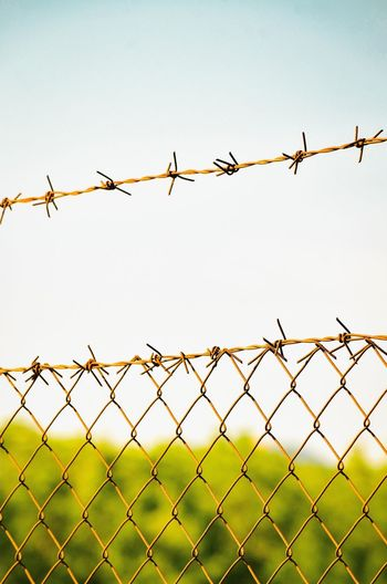 Close-up Of Barbed Wire Fence Concept Conceptual Cover Security Bar Close-up Backgrounds Abstract Spines Metal Danger Protection Chainlink Fence Clear Sky Security System Barbed Wire Protection Safety Backgrounds Bird Danger Security Chainlink Fence Razor Wire Wire Mesh Countryside Fence Wire Sharp Barricade Forbidden