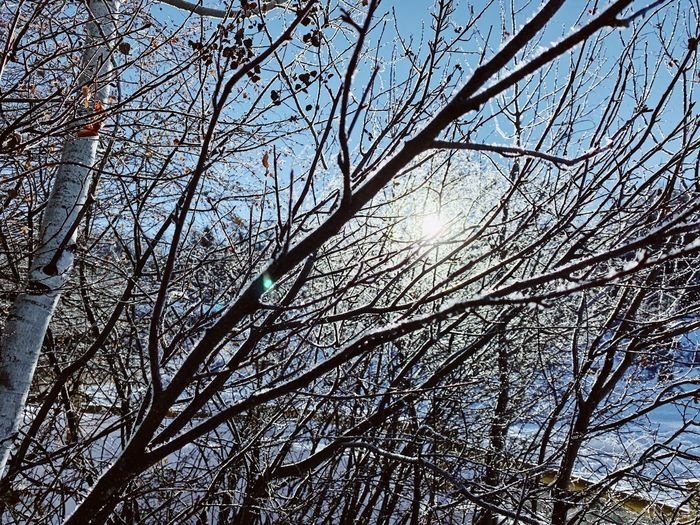 frozen a.m. branches. Winter Conditions Wasatch Back Utah Full Frame Tree Plant Backgrounds No People Low Angle View Branch