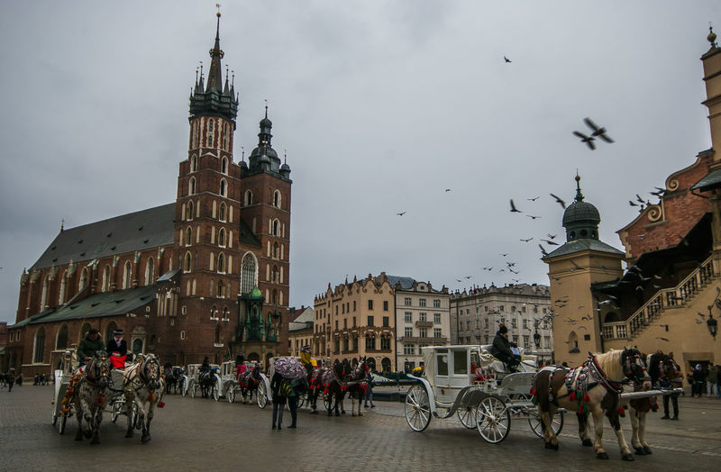 The famous medieval market square of Krakow city with horses in Poland Krakow Rynek Główny Market Square Medieval Pigeon Birds Horse Horses Animals City Town Architecture Basilica Saint Mary Rainy Day Winter Clouds Urban Monument Buildings Carriage Transportation Transport Mode Of Transport Building Exterior Built Structure Building Group Of People Real People Sky Crowd Travel Outdoors