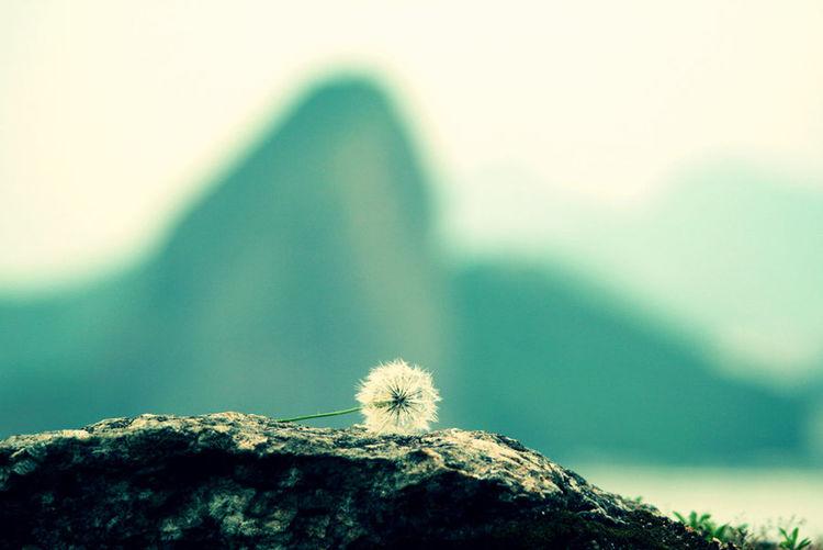 Discover Your City Rio De Janeiro Riodejaneiro Rio Brasil ♥ Discovery Landscape Urban Landscape
