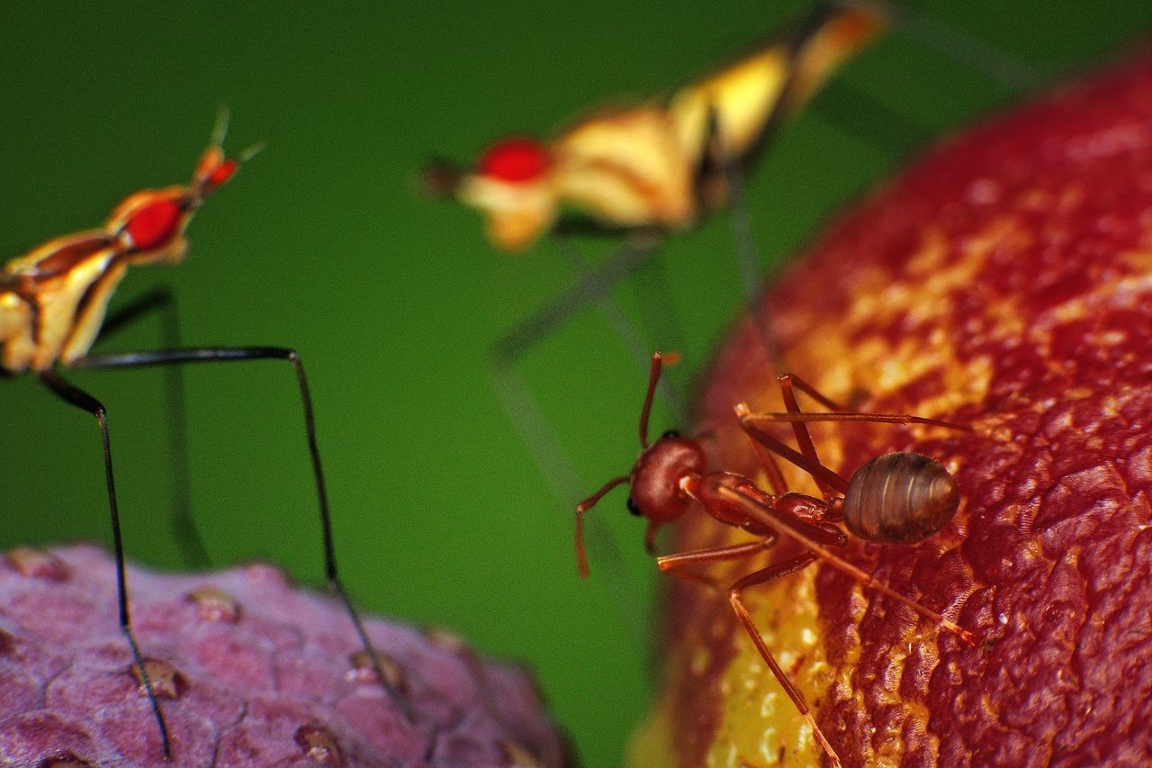 insect, animal themes, animals in the wild, one animal, animal wildlife, close-up, no people, nature, focus on foreground, day, outdoors, red