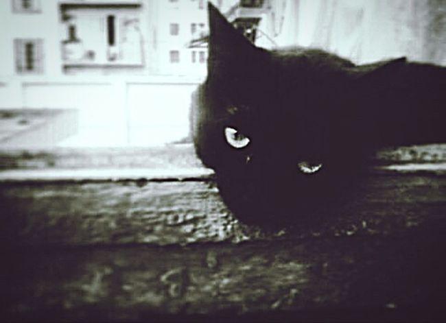 Otello Cat Myfriend Standbyme Someyearsago Blackandwhite Photography