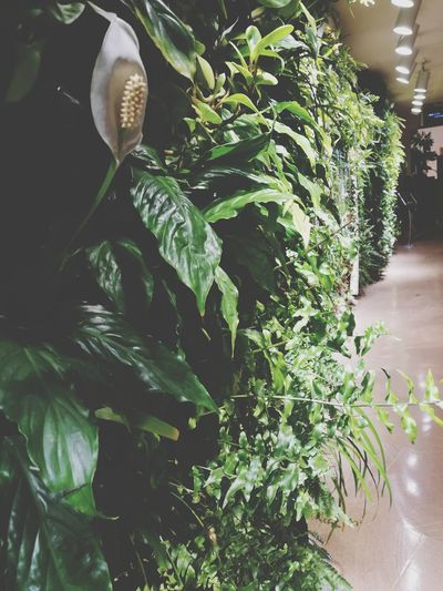 Plant Green Color No People Day Nature Close-up Freshness Fake Plant Indoors  Green Background Plants Beauty Beauty Of Nature No Growth Branch Hotel
