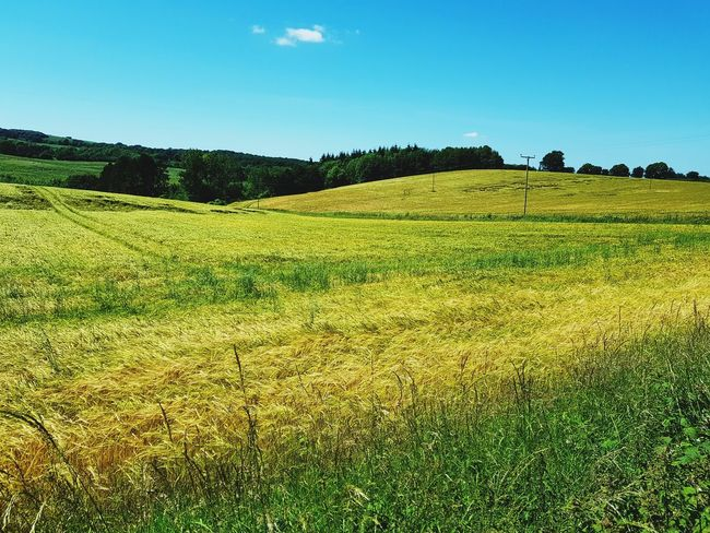 Agriculture Crop  Field Rural Scene Nature Landscape Beauty In Nature Summer No People Cereal Plant Irrigation Equipment Grass Scenics Sunlight