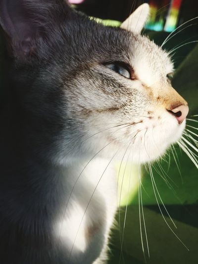 Day Domestic Animals Animal Themes Domestic Cat Pets One Animal No People Close-up Feline Mammal