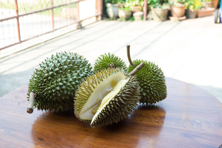 Cactus Close-up Day Durian Fruit Focus On Foreground Food Freshness Green Color Growth Hedgehog Indoors  Nature No People Plant Spiked Table Thorn