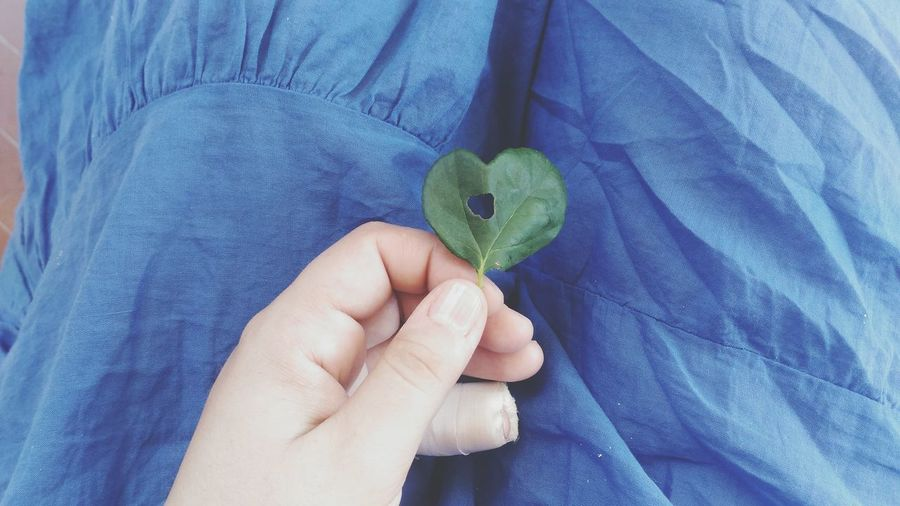 A heart shaped leaf and a heart shaped hole within. Leaf Love Picoftheday Summer Rosé Green Photographerslife Injury Colorphotography Surgery Lifeinphotos Recovery Heart Shape Heart Outdoors Digital Brokenfinger Colors Fragile Medicine Medical Flower Flower Collection Green Color Denim Handful Cropped Hands Cupped Toenail Jeans EyeEmNewHere