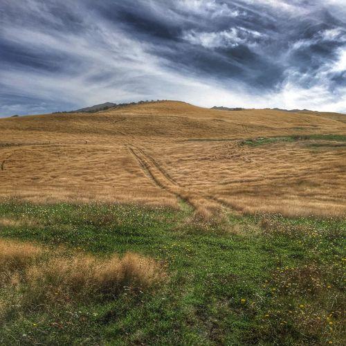 Dry Golden Grass Dry Grass Blue Sky Grass Green Grass