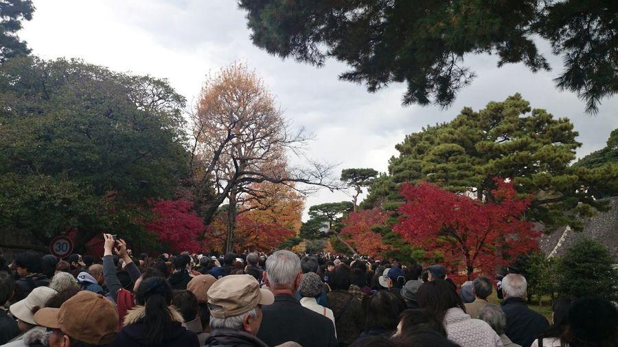 皇居秋季一般公開のメイン会場の乾通りはこの有り様(笑) Imperial Palace Fall Colors Crowded EyeEm Nature Lover
