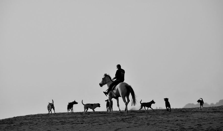 Side View Of Horse Ride On Landscape Against Clear Sky