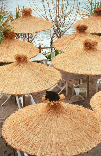 Animal Animal Themes Brown Day Domestic Domestic Animals High Angle View Land Mammal Nature No People One Animal Outdoors Parasol Pets Roof Seat Table Thatched Roof Wood - Material