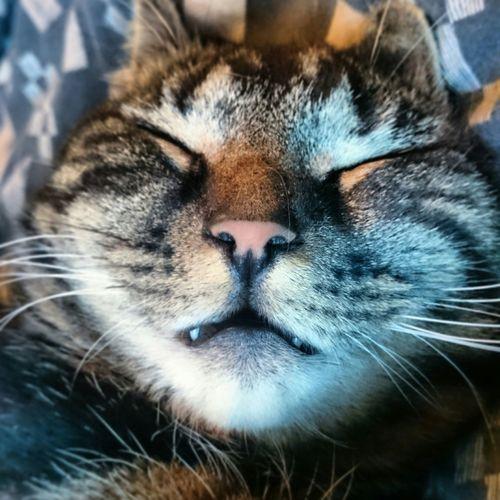 I live with a vampire Vampire Vampire Cat Bengal Cat Sleepy Kitty Evil Cat Catsagram Cats 🐱 Cats Of EyeEm Kitties Cute Cats