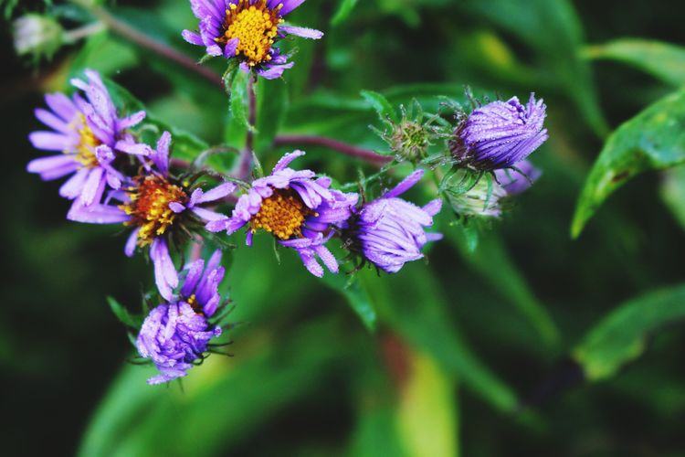 EyeEm Nature Lover EyeEmNewHere Flower Purple Fragility Beauty In Nature Nature Petal Animal Themes Flower Head Growth Close-up Plant Outdoors Focus On Foreground Blooming