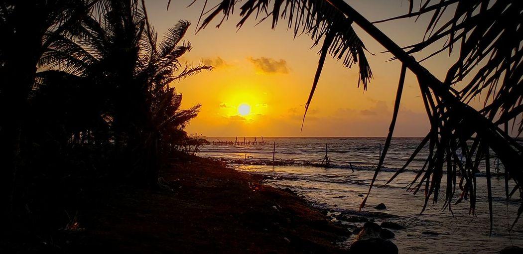 The Mobile Photographer - 2019 EyeEm Awards Tree Water Wave Sea Sunset Beach Horizon Beauty Sand Sunlight The Great Outdoors - 2019 EyeEm Awards