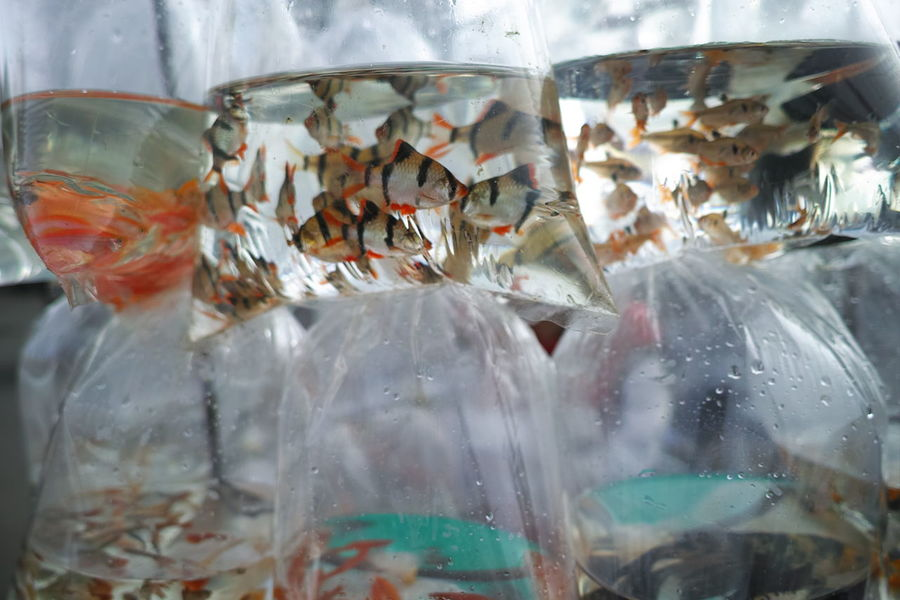 A trip to Đà Lạt- Central highland of Vietnam Abundance Choice Close-up Detail Fish Food Food And Drink Freshness Glass Glass - Material Indoors  Indulgence Plastic Preparation  Red Retail  Sale Selective Focus Still Life Temptation Transparent Variation