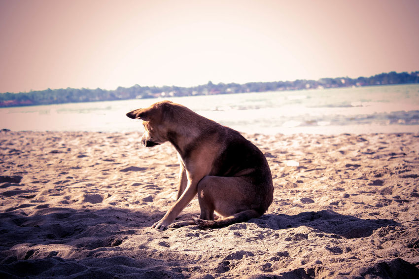 Animal Themes Dog Dog Lover Dog Photography Eyeem Dog World OFFICIAL Photos Club 🐶🌍😄👍 I Love My Dog One Animal Sitting EyeEm Best Shots Eyeem Philippines Pets Getting Away From It All Showcase: November Dog Escape Funy Dogs Dog Are Fun Dogs On The Beach Dog Art
