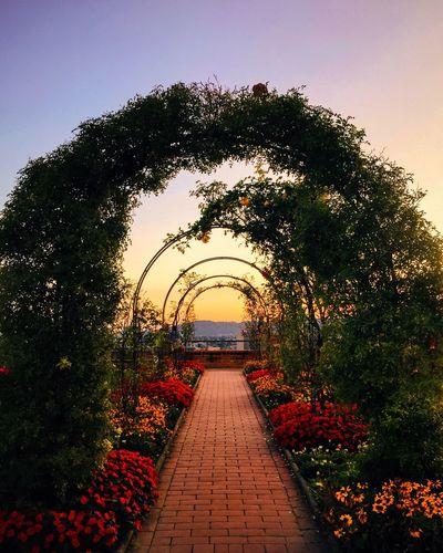 Tree The Way Forward Plant Footpath Growth Formal Garden Park - Man Made Space Arch Clear Sky Tranquility Walkway Tranquil Scene Flower Pathway Diminishing Perspective Day Nature Garden Outdoors Scenics