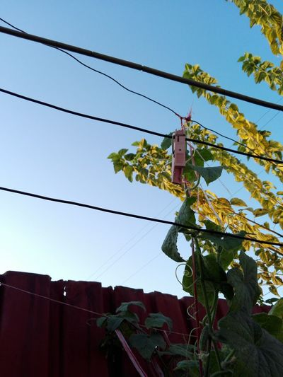 Low Angle View Sky Cable No People Outdoors Tree Plants Edited By WOLFZUACHiV Huaweiphotography Ionita Veronica WOLFZUACHiV Photos Wolfzuachiv Veronica Ionita Eyeem Market On Market Huawei Photography WOLFZUACHiV Photography Edited By @WOLFZUACHiV No Person Cucumber Plant Cucumber Leaves Cucumber Vines Clothespin Mulberry Branches Mulberry Leaves
