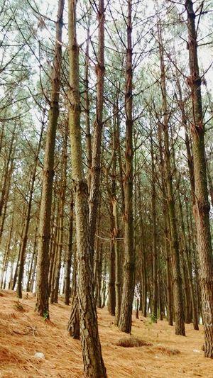 Bosque Libre Phtographydocumentary Phtography Atardeceres