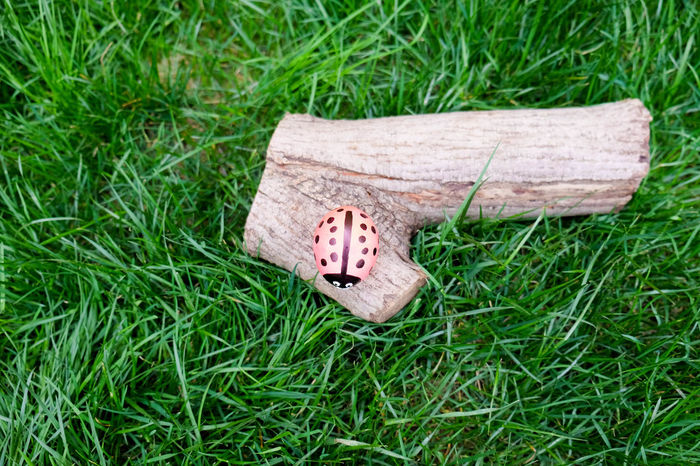 Ladybug Close-up Day Grass Green Color High Angle View Nature No People Outdoors Painted Easter Egg