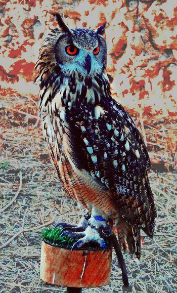 Check This Out EyeEm Best Shots EyeEm Gallery EyeEm Animal Lover Owl Eyes Owl