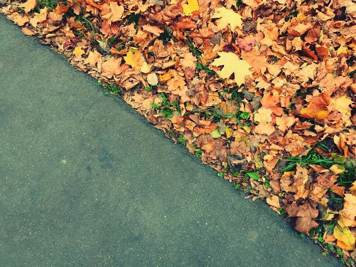 High angle view of road by autumn leaves on field