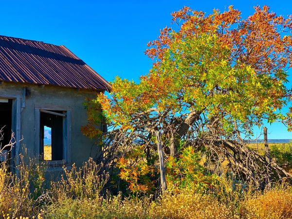 """Autumn Present, Autumn Past"" Bright Autumn colors still declare their vibrant presence beside an abandoned old home in the tiny Village of Cedarvale, New Mexico. Fall Colors Fall Beauty Fall New Mexico New Mexico Photography Bright Colors Blue Sky Abandoned Abandoned Buildings Autumn colors Autumn Architecture Built Structure Building Exterior Sky Building Nature Clear Sky"