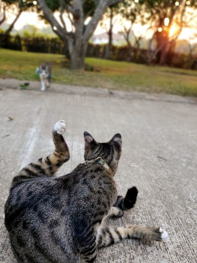Cat lying on the road
