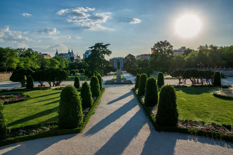Plants and trees in formal garden against sky during sunset