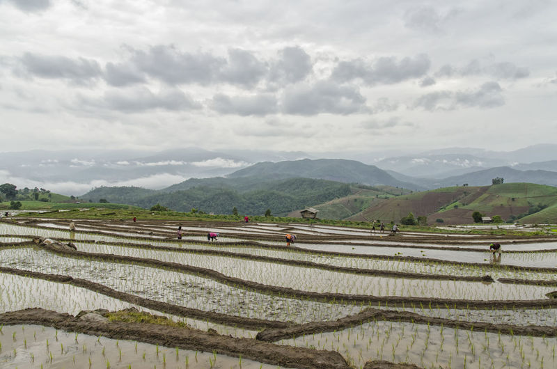 Start the rice terraces on the mountain. Beauty In Nature Cloud Cloud - Sky Cloudy Day Farmers Growth Hill Horizon Over Land Landscape Mountain Mountain Range Nature Outdoors Paddy Field Rice Ricefield Sky