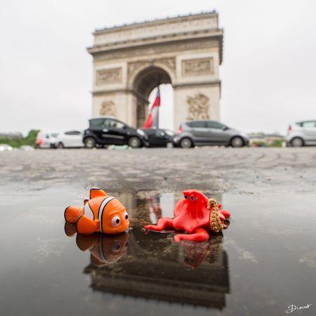 Nemo et Hank visitent Paris en suivant la Seine et les Innondations